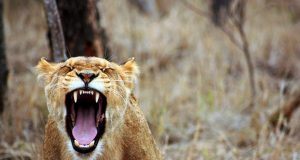 4 техники управления гневом