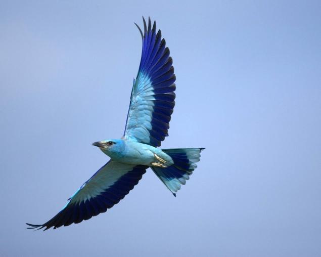 Чудо птиц